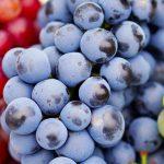 Frutas y verduras de diciembre.