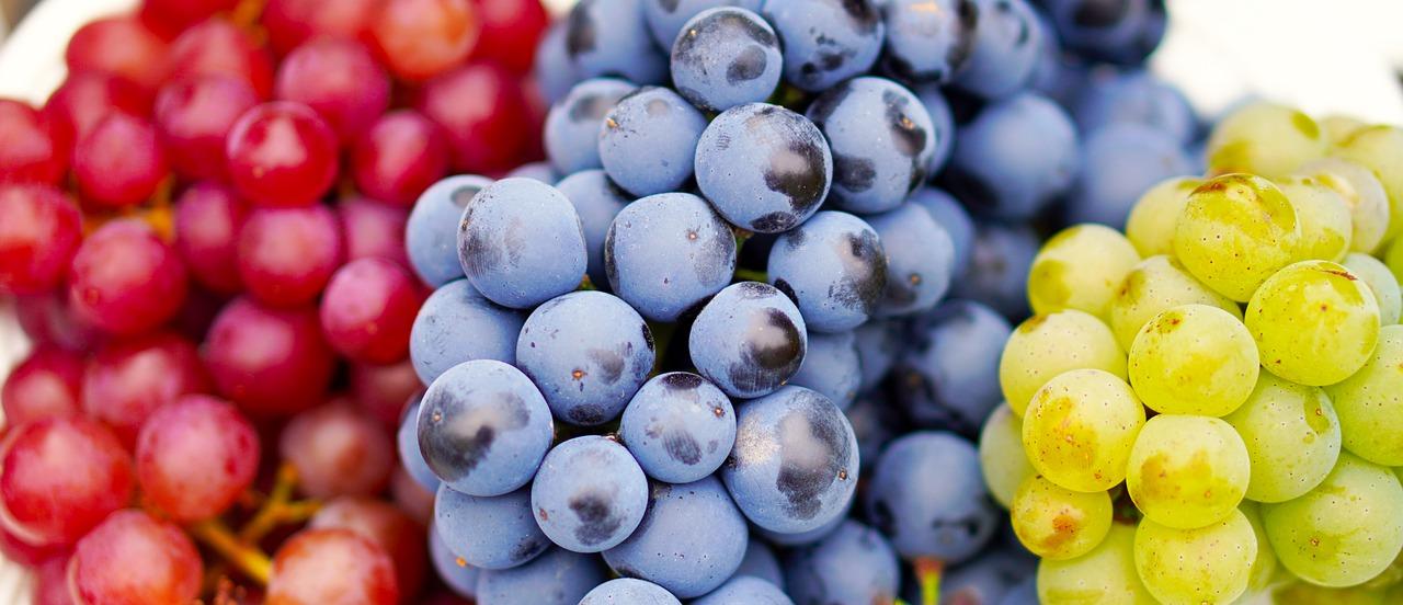 grapes-4495944_1280
